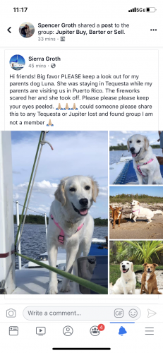 Lost & Found Dogs, Cats, and Pets in Port St  Lucie, FL 34957 - Page