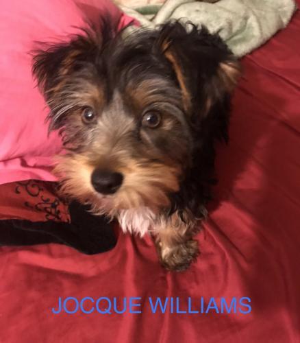 Lost Male Dog last seen Near Pocahontas Pl & Tecumseh Dr, Hampton, VA 23661