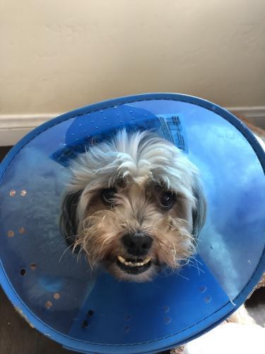 Lost Female Dog last seen Near Indiana St & 7th St, Buena Park, CA 90621