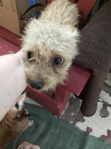 Found/Stray Male Dog last seen Near Figueroa Dr & N St Pierre Ave, Altadena, CA 91001