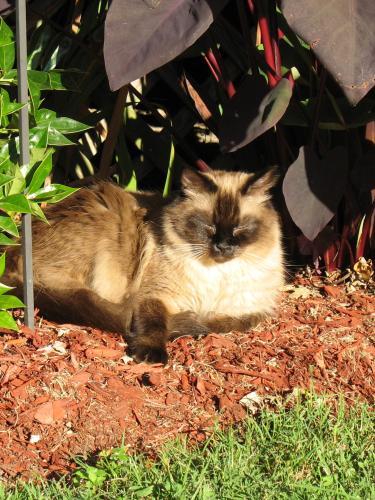 Lost Male Cat last seen Near Denton Dr & Mansford Dr, Hampton, VA 23664