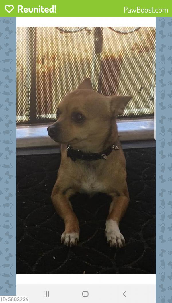 Reunited Male Dog last seen Near Marengo St & Tremont St, Los Angeles, CA 90033