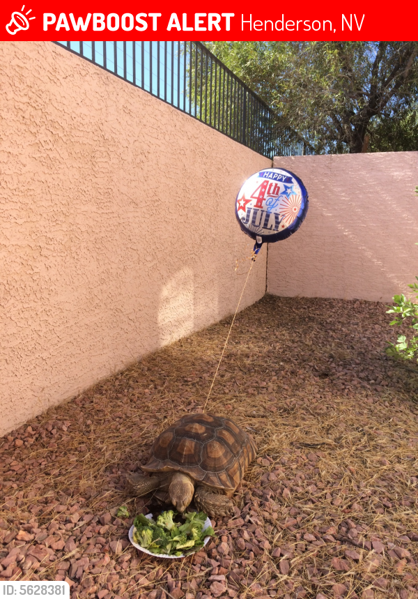 Lost Male Reptile last seen Near S Eastern Ave & E Torino Ave, Henderson, NV 89074