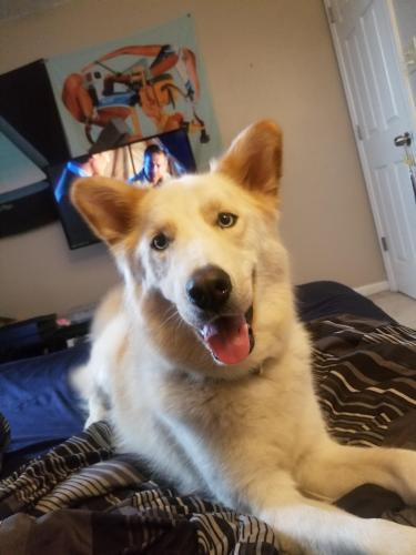 Lost Male Dog last seen Near 19th St & Mulberry Ave, Newport News, VA 23607