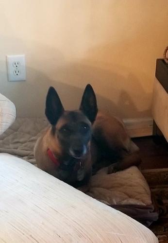 Lost Female Dog last seen Near Rivers Ridge Cir & Depriest Downs, Newport News, VA 23608