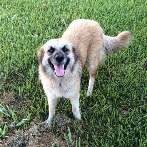 Found/Stray Unknown Dog last seen Near Crossmeadow Dr & Meadowridge Dr, Beaumont, TX 77706
