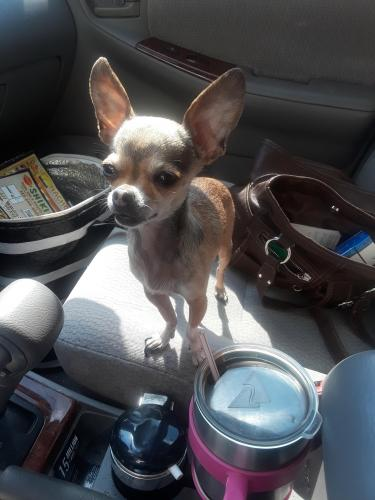 Lost Female Dog last seen Near Mount Pleasant Rd & F Santoro Way, Chesapeake, VA 23322