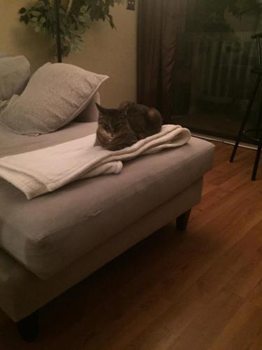 Found/Stray Female Cat last seen Near Sea Shell Rd & Shore Drive, Virginia Beach, VA 23451