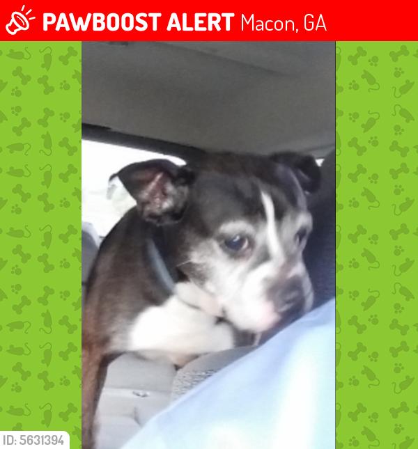 Lost Male Dog last seen Near Senate Pl & Nottingham Dr, Macon, GA 31211