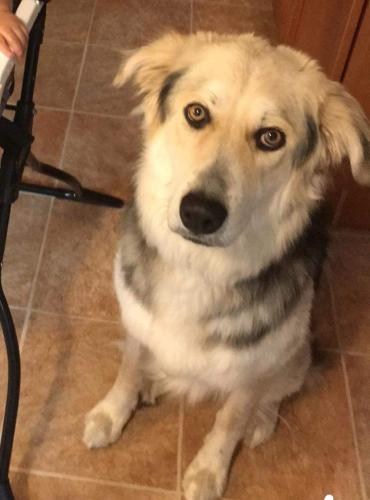 Lost Male Dog last seen George Washington Hwy S, Chesapeake, VA, USA, Chesapeake, VA 23323