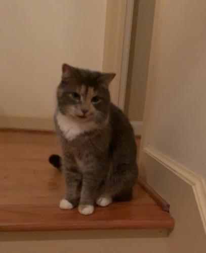 Lost Female Cat last seen Near Wishart & N Witchduck Rd, Virginia Beach, VA 23455