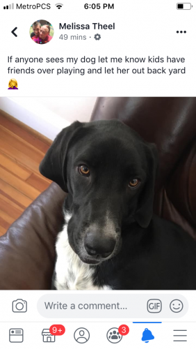 Lost Female Dog last seen Near Rodgers St & Jefferson St, Chesapeake, VA 23324