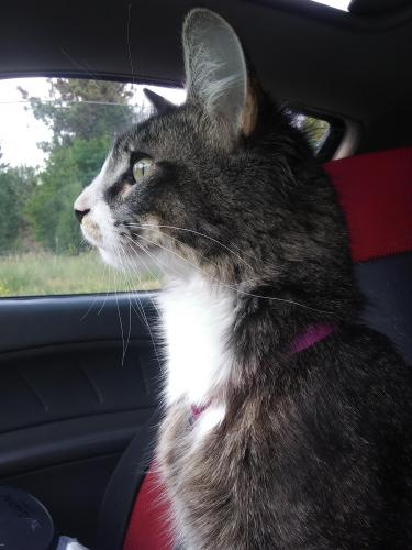 Lost & Found Dogs, Cats, and Pets in Missoula, MT 59801 - Page 1