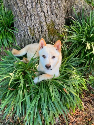 Lost Male Dog last seen Near Aragona Blvd & Westgrove Rd, Virginia Beach, VA 23455