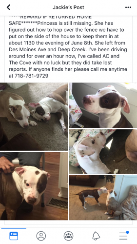 Found/Stray Female Dog last seen Near Irwin St & Channing Ave, Portsmouth, VA 23702