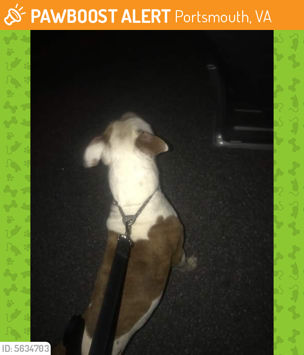 Surrendered Female Dog last seen Near Green Point Ln & Albany Way, Portsmouth, VA 23702