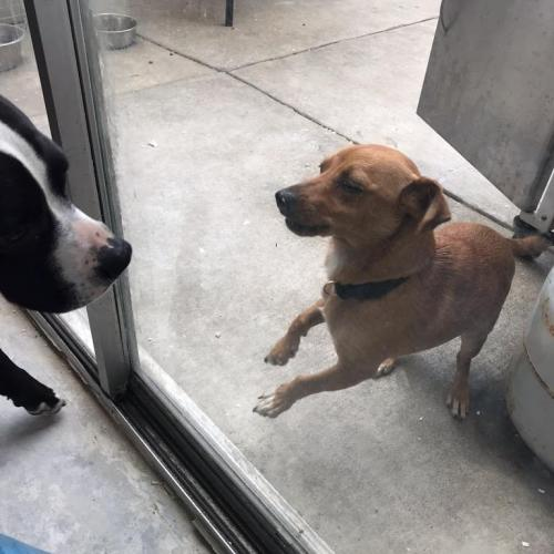 Found/Stray Male Dog last seen Near W Commonwealth Ave & Turner Ave, Fullerton, CA 92833