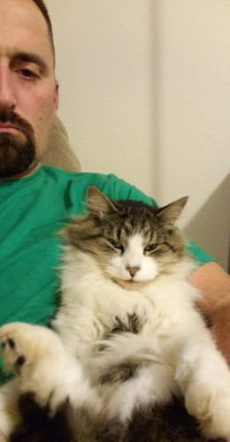 Lost Male Cat last seen Near Rustic Arbor Way & Harvest Farms Ln, Virginia Beach, VA 23455
