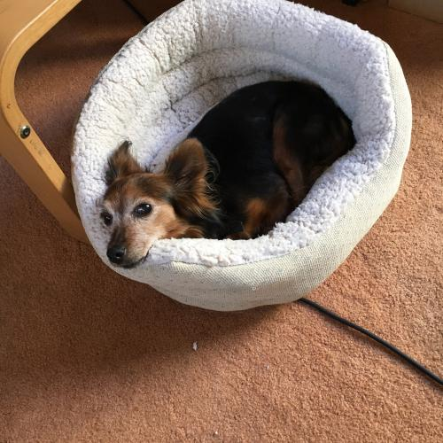 Lost Female Dog last seen Near Dalton Ave & W 30th St, Los Angeles, CA 90018