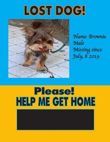 Lost Female Dog last seen Near Martin Luther King & Ernestine ave, Lynwood, CA 90262