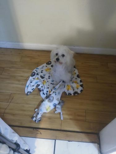 Lost Male Dog last seen Near W 109th St & S Figueroa St, Los Angeles, CA 90044