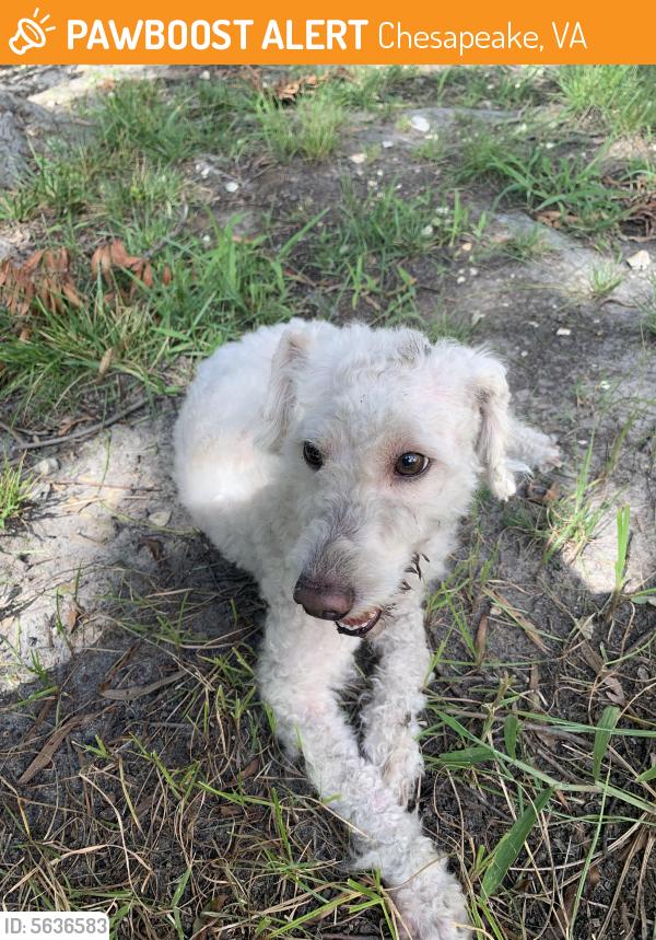 Found/Stray Male Dog last seen Near Mill Lake Quarter & Mabry Mill Pl, Chesapeake, VA 23320