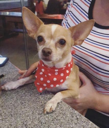 Lost Male Dog last seen Near Jersey Ave & Brimley St, Norwalk, CA 90650
