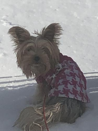 Lost Female Dog last seen Forest lawn between Virginia and Bexley, Norfolk, VA 23505
