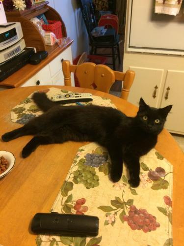 Lost Female Cat last seen Near Hazelwood Rd & Fir Ct, Hampton, VA 23666