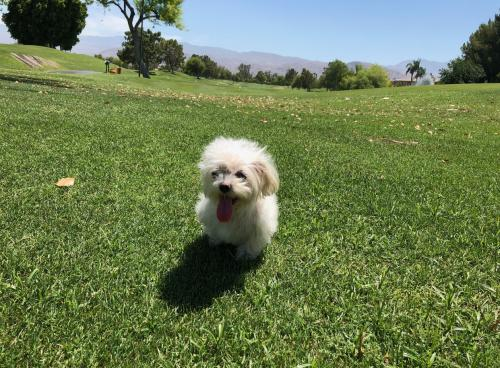 Lost Female Dog last seen Near W Vail Dr & Woodlake Ave, Los Angeles, CA 91307