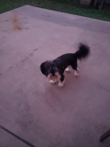 Lost & Found Dogs, Cats, and Pets in Fort Worth, TX 76108 - Page 18