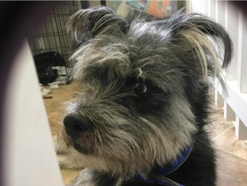 Lost Male Dog last seen Near 57th St & 4th , Los Angeles, CA 90043