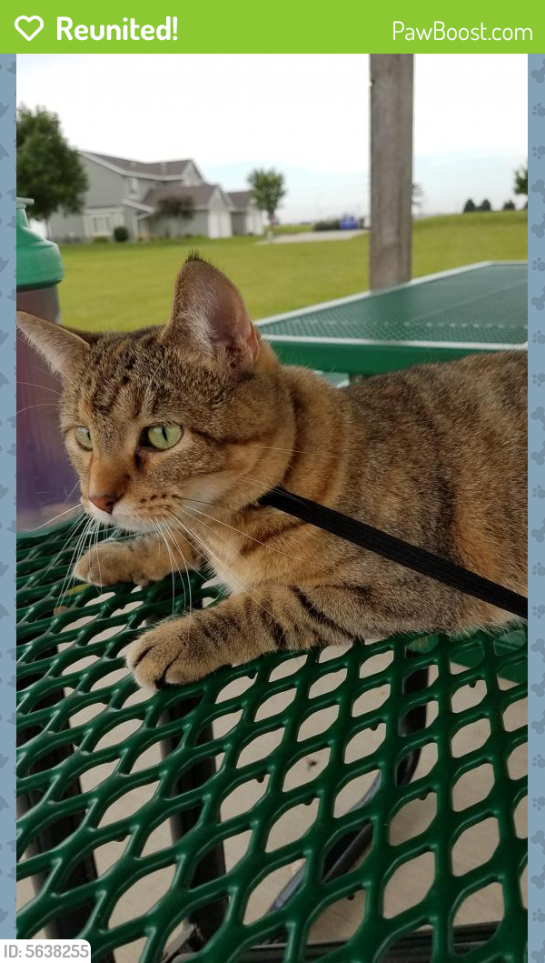 Reunited Female Cat last seen Near N Hazel Pl & W Oakcrest Pl, Sioux Falls, SD 57107