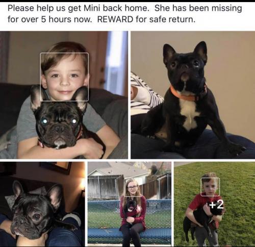 Lost Female Dog last seen Near Dixie Drive, Vidor, TX, USA, Vidor, TX 77662