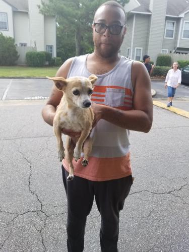 Found/Stray Female Dog last seen Near Segovia Ct & Castilian Dr, Virginia Beach, VA 23462