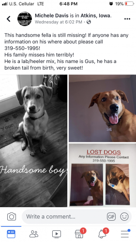 Lost & Found Dogs, Cats, and Pets in Cedar Rapids, IA 52302