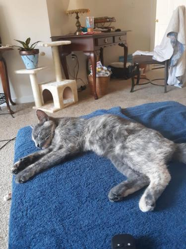 Found/Stray Male Cat last seen Near River Rock Way & Stoney Creek la, Newport News, VA 23608