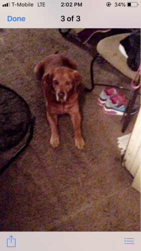 Lost Female Dog last seen Near W Crockett St & California St, Beaumont, TX 77701