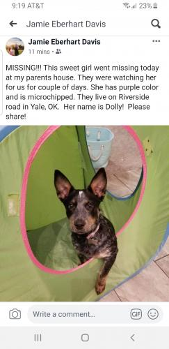 Lost & Found Dogs, Cats, and Pets in Oklahoma 74075 - Page 1 | PawBoost