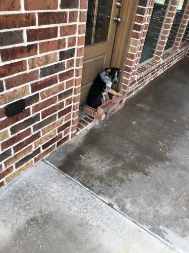 Found/Stray Male Dog last seen Near Sam Rayburn, Orange, TX, USA, Orange, TX 77630