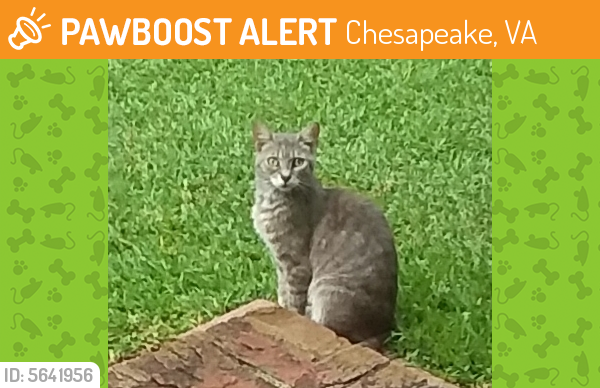 Found/Stray Unknown Cat last seen Near Jolliff Rd & Quivers Keep, Chesapeake, VA 23321