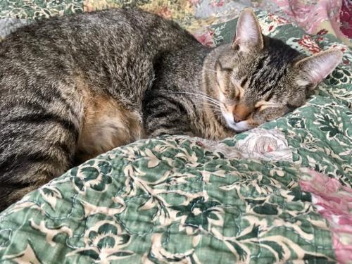 Lost Male Cat last seen Near Riverfront Ct & Old Virginia Beach Rd, Virginia Beach, VA 23451