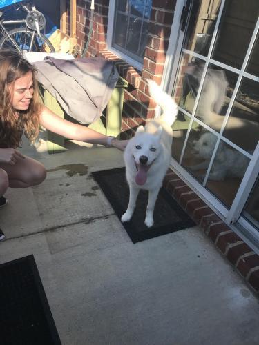 Found/Stray Unknown Dog last seen Near Elston Ln & Gamston Ln, Virginia Beach, VA 23455