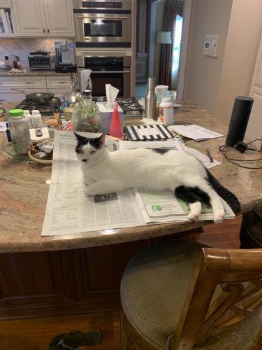 Lost Male Cat last seen Near Kline Dr & Watersedge Dr, Virginia Beach, VA 23452