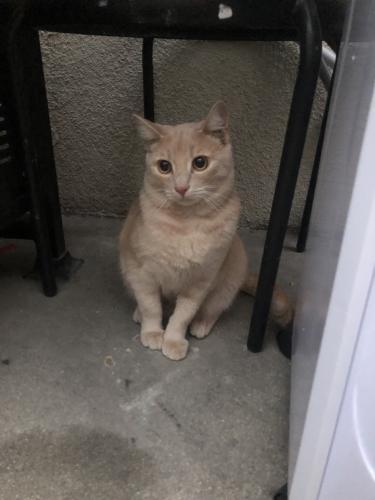 Lost Male Cat last seen Near Oak St & Avocado St, Lomita, CA 90717