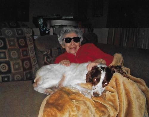Lost Male Dog last seen Near W Lambert Rd & Martinez Dr, La Habra, CA 90631
