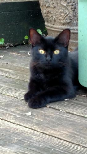 Lost Male Cat last seen Holiday Trav-L park Virginia Beach va , Virginia Beach, VA 23451