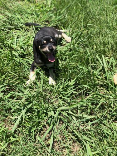 Lost & Found Dogs, Cats, and Pets in Mississippi 39440