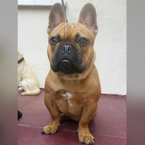 Lost Male Dog last seen Near W Pico Blvd & S Van Ness Ave, Los Angeles, CA 90019
