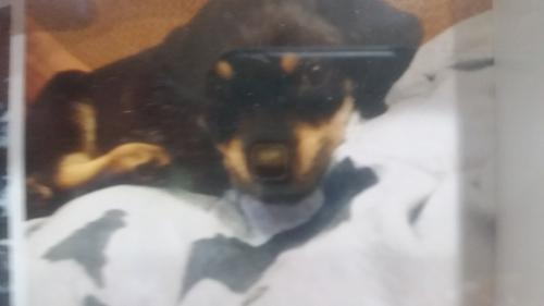 Lost & Found Dogs, Cats, and Pets in Mobile, AL 36608 - Page